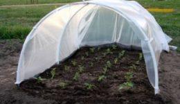 Как уберечь рассаду от возвратных заморозков весной
