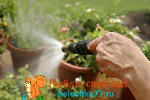 Применение янтарной кислоты для садовых растений
