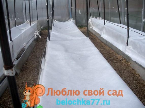 Защита растений от заморозков в теплице