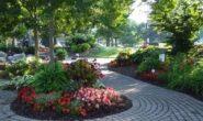 Цветы, растущие в тени: фото, видео