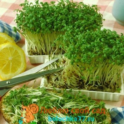 крессс-салат