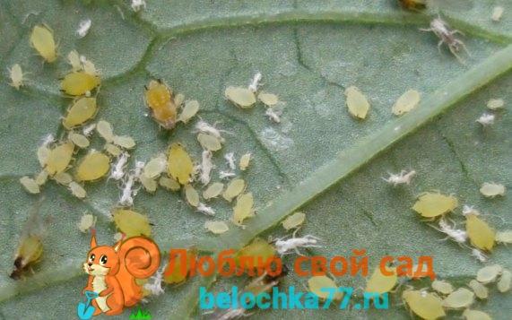 Болезни и вредители поражающие рассаду на подоконнике