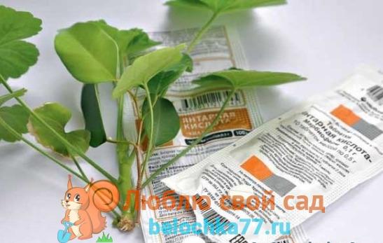 Применение янтарной кислоты для комнатных растений