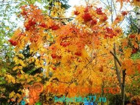 Лунный календарь на октябрь 2017 года для садоводов, огородников