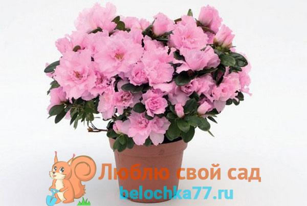 Условия для цветения