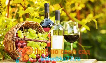 Сорта винограда для вина с фото: Каберне Совиньон, Изабелла, Шардоне