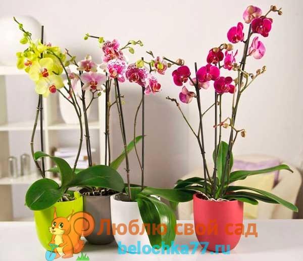 Выбор горшка и грунта, кашпо для орхидеи