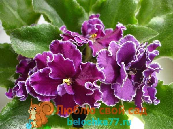 Цветок из семян с синими цветами