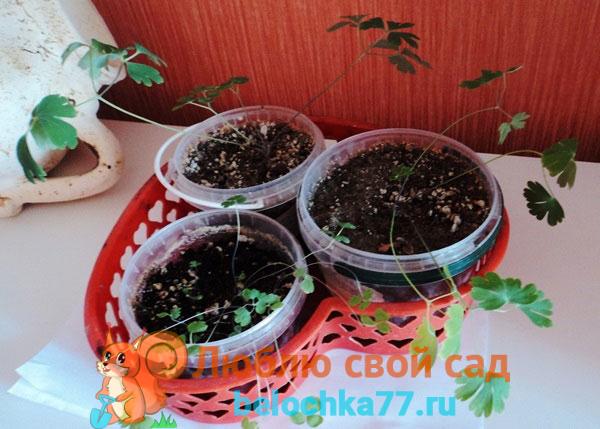 Посев семян в подготовленные емкости