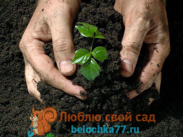Каким растениям необходимо это органическое удобрение