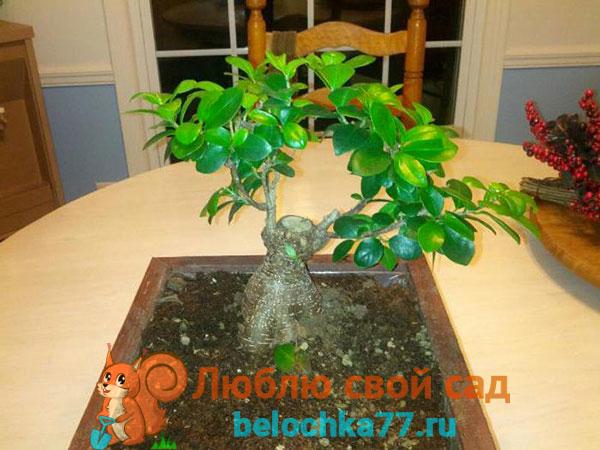 Оптимальные условия для выращивания в доме