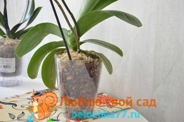 Выращивание орхидеи в закрытой системе