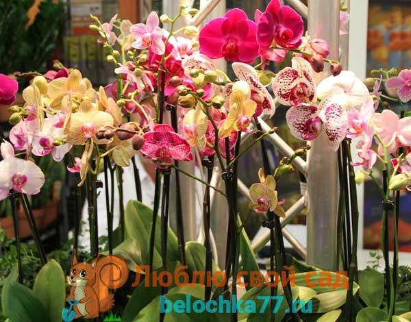 Виды орхидей с названием, описанием и фото