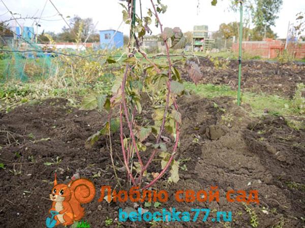 Сроки посадки, когда лучше сажать – весной или осенью