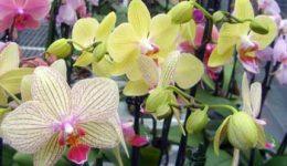 Виды орхидей с фото и названиями экзотических красавиц!