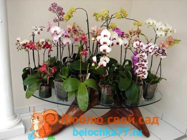 Когда размножать орхидею