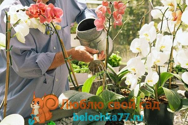 Общие правила ухода за молодыми орхидеями