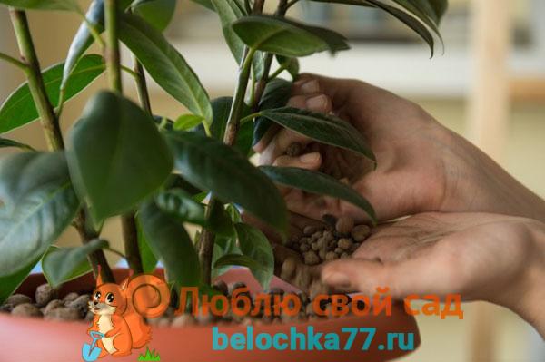 Подготовка к пересадке цветка: горшок, грунт