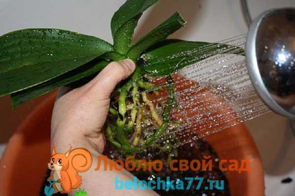 Промывание корней