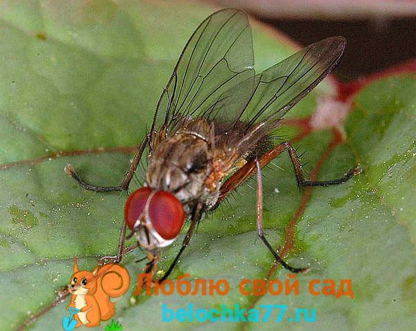 Какие запахи отпугивают муху?