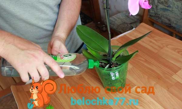 Как часто и чем поливать орхидею в домашних условиях