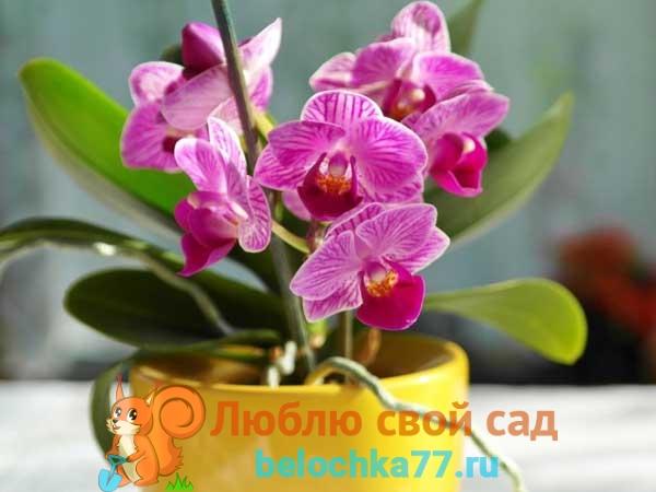 Когда орхидею нужно пересаживать?