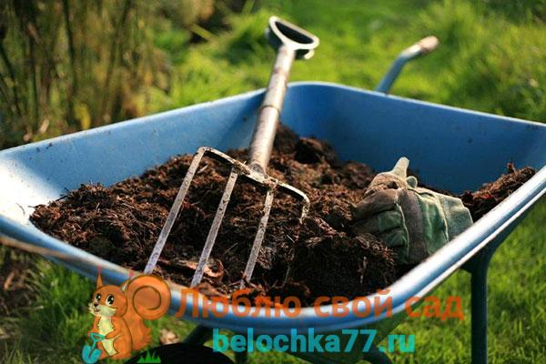 Польза конского навоза для растений
