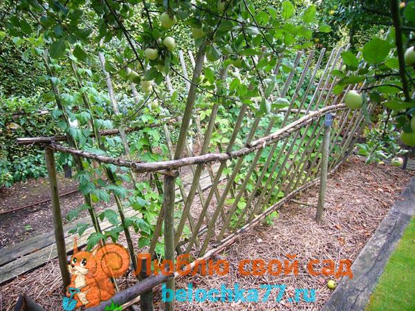 Совместимость ежевики на участке с другими садовыми культурами