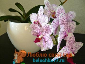 Орхидея - уход в домашних условиях. Виды орхидей с фото