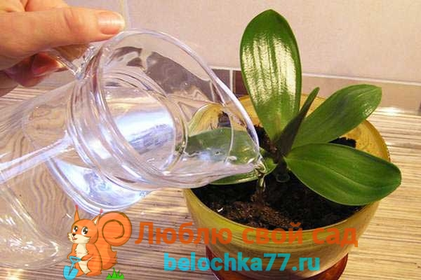 Как ухаживать за орхидеей после пересадки
