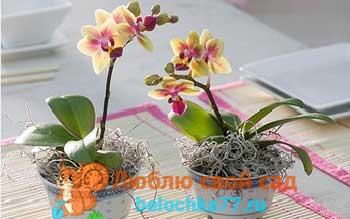 Почему орхидея не цветёт в домашних условиях? Условия для цветения
