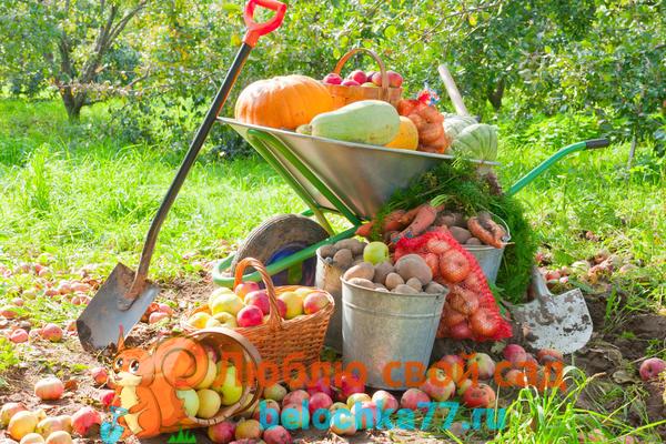 Что делать с саду - огороде осенью