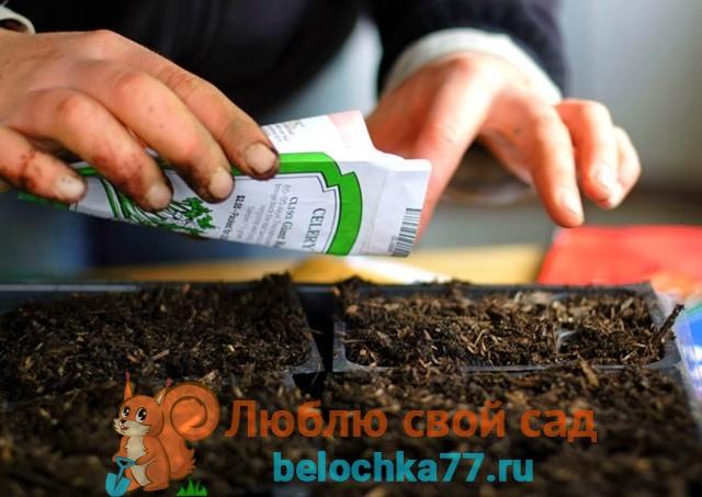 Благоприятные и неблагоприятные посадочные дни в феврале 2018 года для семян овощей и цветов