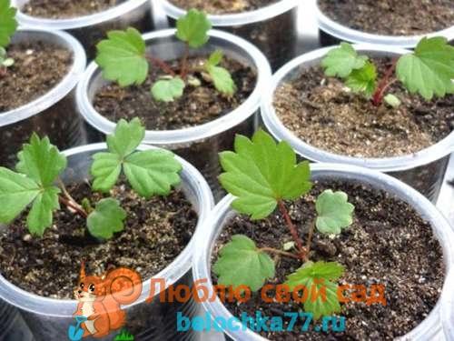 Какие овощи сажать в январе на рассаду