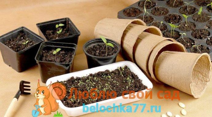 Какие условия нужны для выращивания рассады в январе