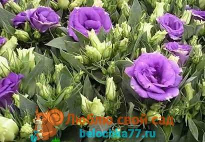 Букет пионов - Цветы анимация - Анимационные блестящие