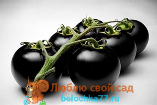 Особенности черных помидоров, польза
