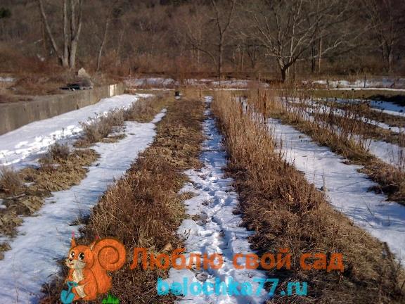 Благоприятные и неблагоприятные посевные дни в марте для посадок семян овощей и цветов