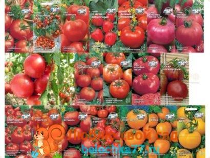 посев томатов для теплицы
