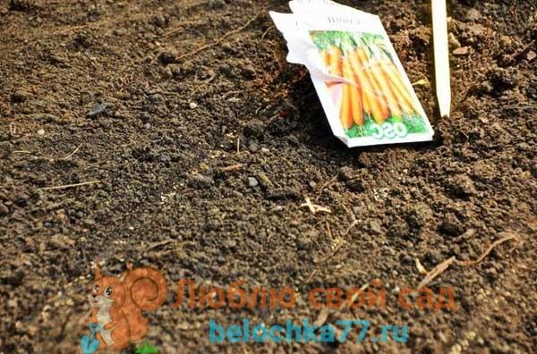 Можно посадить перец, лук, чеснок, свеклу, морковь?