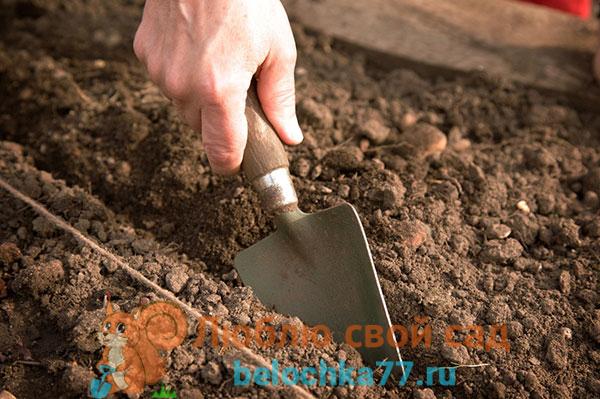 Почва и условия для выращивания моркови