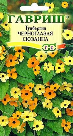 Сорт Черноглазая Сюзанна