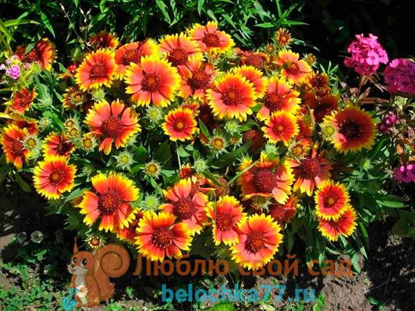 Описание цветка с фото