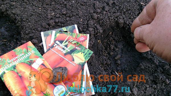 Можно ли сажать морковь после моркови?