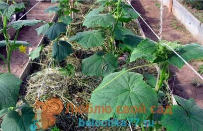 Чередование культур в огороде (