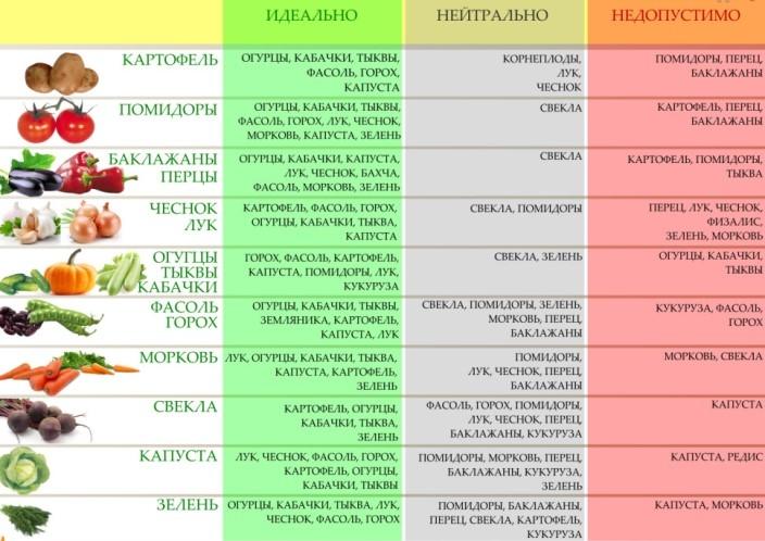 таблица севооборота томатов