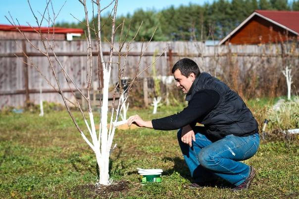 Что делать садоводу в мае