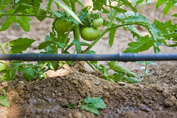 Полезные советы садоводам