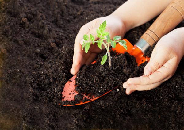 Тяжёлая, кислая почва