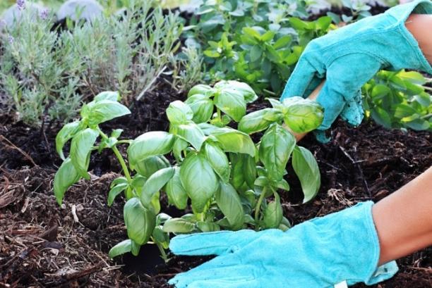Что делать садоводу в июне